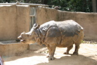 LaZoo-Rhino