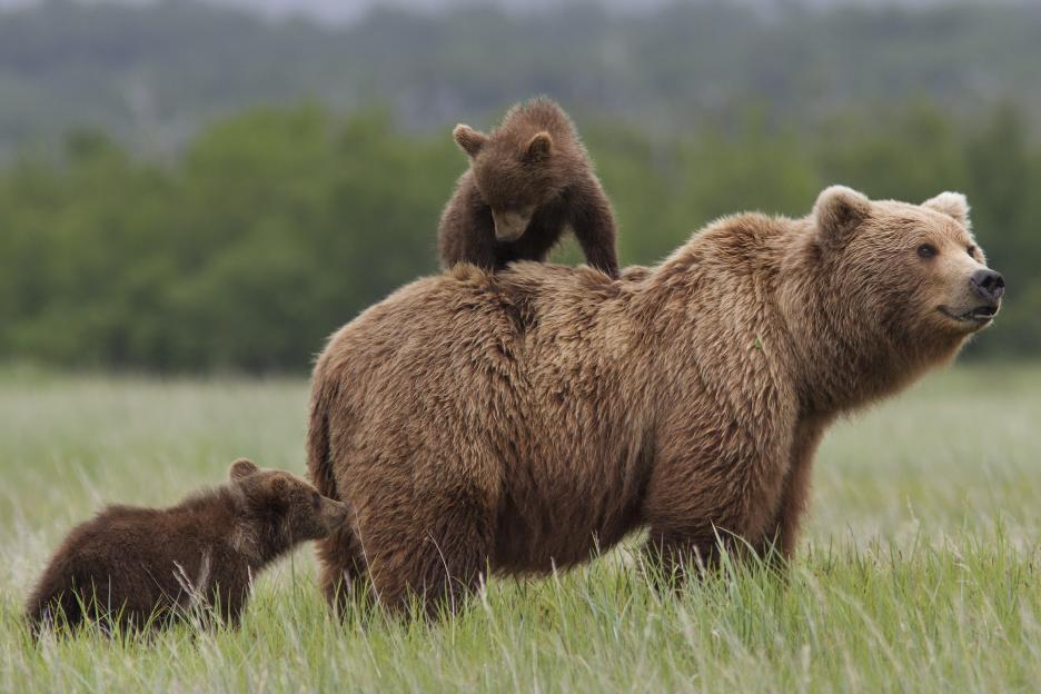 bears5346e48a5e6d0